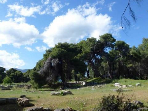 Epidavros, bois sacré